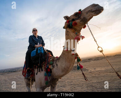 Cavalcare i cammelli vicino le Grandi Piramidi di Giza, Il Cairo, Egitto Foto Stock