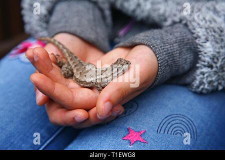 Ragazza con lizard in mani Foto Stock