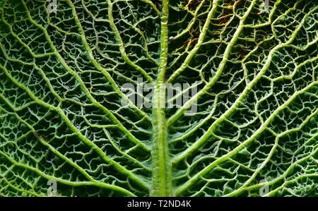 Una vita ancora, fotografia di close-up di un verde foglia di cavolo - dal laboratorio di arte da Mike Russell.