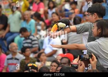 Toucan essendo alimentato da entusiasta turistico a Jurong Bird Park, Singapore Foto Stock