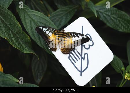Butterfly rimanendo sul segno ' non toccare le farfalle ' Foto Stock