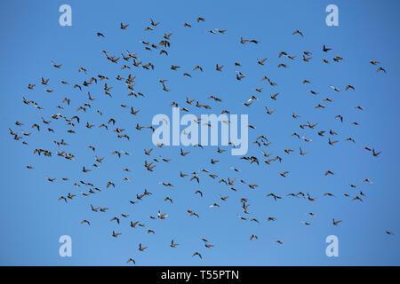 Uccelli contro un luminoso cielo blu Foto Stock