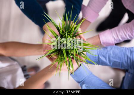 Gruppo di imprenditori Mani verde pianta in vaso Foto Stock