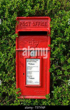 Un tradizionale rosso British Post Office (Royal Mail) postbox circondato da una siepe a Castle Douglas, Scozia. Foto Stock