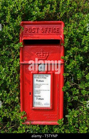 Un tradizionale rosso British Post Office (Royal Mail) postbox circondato da una siepe a Castle Douglas, Scozia. Foto Stock