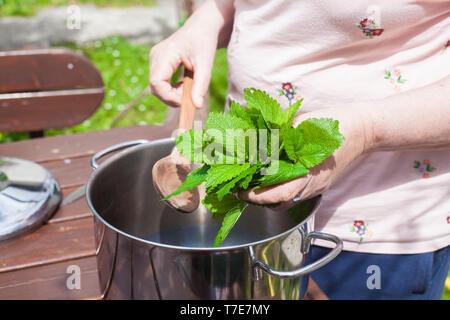 Una donna di mettere le foglie di Melissa - melissa officinalis in una pentola per fare uno sciroppo Foto Stock