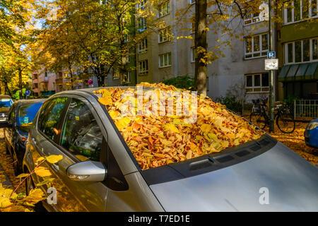 Fogliame di autunno su auto, Berlino, Germania Foto Stock
