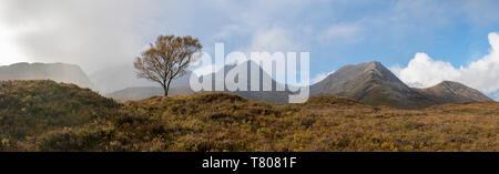 Un Lone Tree e il Cuillins sull'Isola di Skye, Ebridi Interne, Highlands scozzesi, Scotland, Regno Unito, Europa Foto Stock
