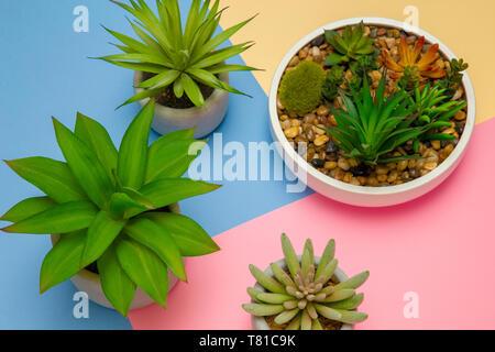 Succulento per le piante in vaso su sfondo color pastello, indoor piante decorative, pastello colorato, moderno interior design concept, colore laici piatta