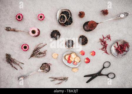Rusty vintage forbici, erbe e fiori su sfondo di calcestruzzo. Foto Stock