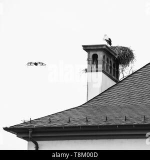 Drone moderno battenti vicino a nido di cicogna sui tetti del vecchio edificio di Strasburgo in Alsazia, Francia bianco e nero immagine quadrata Foto Stock