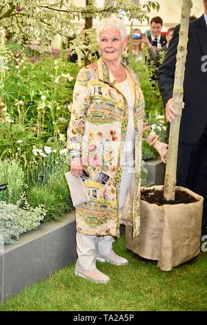 Dame Judi Dench è stata presentata con un alberello elm tree per lanciare il ri-elming della campagna britannica a partire da quest'anno. Hillier vivai, RHS Chelsea Flower Show, premere giorno, Londra Foto Stock