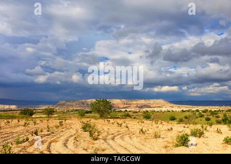 Piccoli cespugli di uve piantate sul suolo roccioso contro lo sfondo di incredibilmente il bellissimo paesaggio di montagna delle valli di Cappadocia Foto Stock