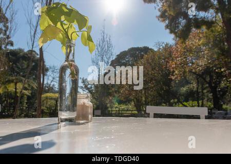 Una vista ravvicinata di una bottiglia di vetro follato con acqua con un green leafed impianto interno con un piccolo vaso di vetro con lo zucchero in su un tavolo bianco in Gard