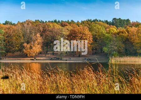 Grunewaldsee, Grunewald, Berlino, Deutschland Foto Stock