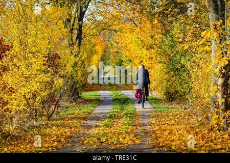 Ciclista sul percorso autunnale nella riserva naturale Kirchwerder Wiesen, Germania Amburgo Foto Stock