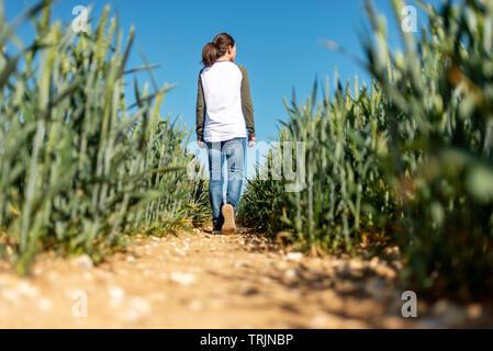 Vista posteriore di una donna a piedi attraverso un campo di grano verde, blu cielo. Foto Stock