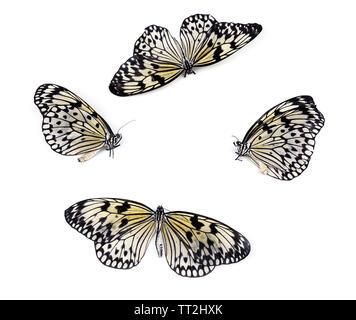 Farfalle bellissime, isolato su bianco Foto Stock