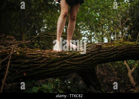 Le gambe di una ragazza in piedi su un albero Foto Stock