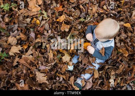 Vista aerea del bambino seduto in mezzo a foglie secche durante l'autunno Foto Stock
