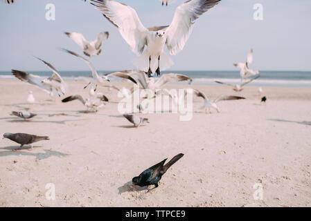 Gabbiani e Piccioni a beach contro sky Foto Stock