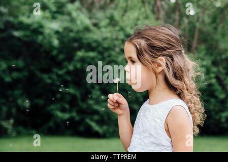 Close-up della ragazza di tarassaco di soffiaggio mentre si sta in piedi sul campo Foto Stock