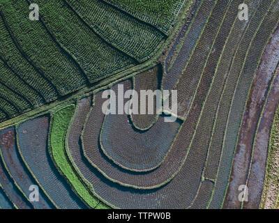 Vista aerea di campi di riso