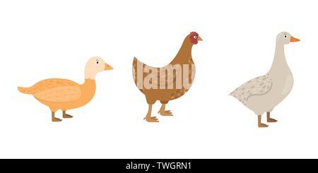 Anatra, oca, icone di pollo in stile appartamento, pollame illustrazione vettoriale Foto Stock