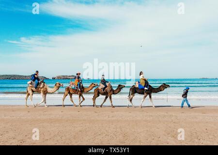 I turisti sui cammelli sulla spiaggia. Turismo in Marocco, Algeria, Tunisia. Viaggiare in Asia concetto