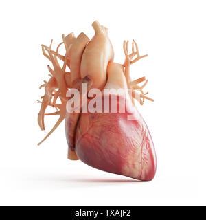 3D Rendering accurato dal punto di vista medico illustrazione di un cuore umano