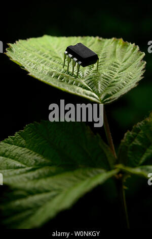 Entità elettronico su una foglia di pianta