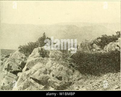 Immagine di archivio da pagina 428 di morire Arve in der Schweiz