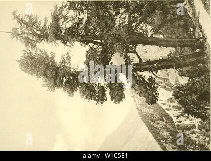 Immagine di archivio da pagina 530 di morire Arve in der Schweiz