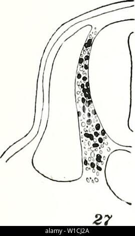 Immagine di archivio da pagina 66 dello sviluppo dei lembi pettorali