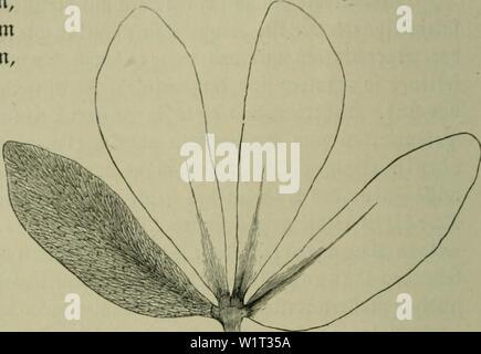 Immagine di archivio da pagina 89 di Das Leben der Pflanze (1906). Das Leben der Pflanze daslebenderpflan06fran Anno: 1906