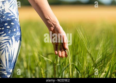 La donna in esecuzione la sua mano attraverso la maturazione del grano in un campo vicino. Foto Stock