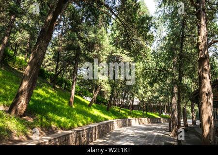 Vista dell'iconico bellissimi alberi e percorsi a piedi attraverso il verde dei parchi presso il Palazzo Estivo, un vasto insieme di laghi, giardini e palazzi in essere Foto Stock