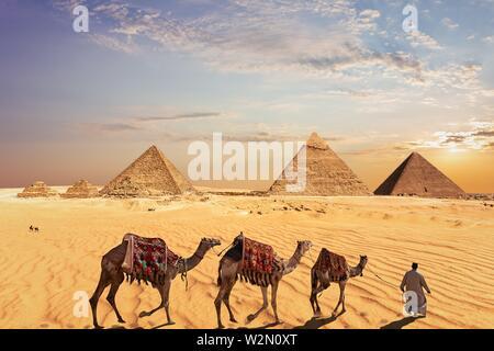 Camel caravan vicino le Grandi Piramidi di Giza in Egitto. Foto Stock