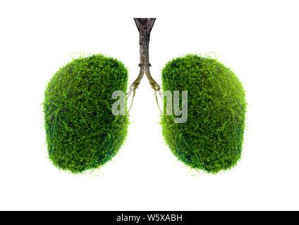 Polmone verde a forma di albero di immagini, concetti medici, autopsia, visualizzazione 3D e animali come un elemento Foto Stock
