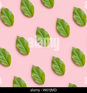 Fresche foglie verdi pattern su un sfondo rosa, piatti creativi i laici per la progettazione