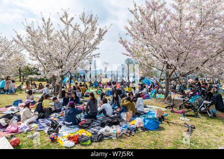 Giapponesi a picnic, Hanami festival, ciliegi in fiore in primavera, Koto City, Tokyo, Giappone Foto Stock