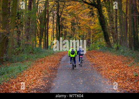 Due persone in bicicletta lungo una corsia di marcia attraverso il bosco autunnale, Holkham, Norfolk, Inghilterra, Regno Unito, novembre. Foto Stock