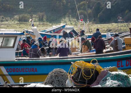 Lavoratori Scegliere granchi da reti da pesca in La Rinconada beach in Itata, Cile Foto Stock