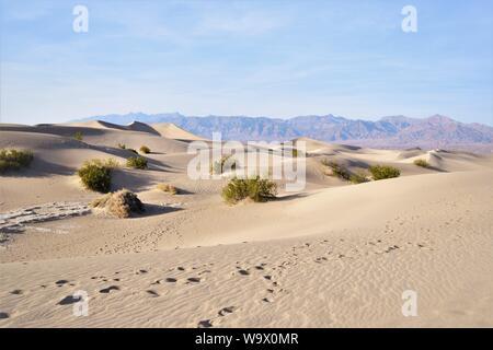 Orme nella sabbia, Parco Nazionale della Valle della Morte