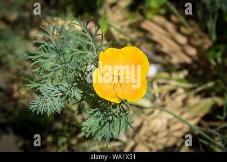 Fiore Giallo Quattro Petali.Fiore Giallo Con Quattro Petali Di Colore Arancione Macro Vista