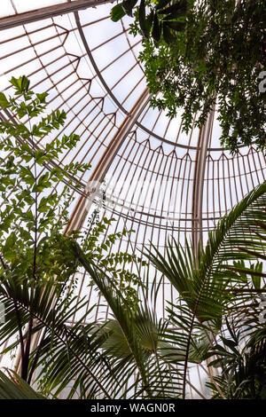 Dentro la casa delle palme, Serra da Charles Lanyon,in Royal Botanic Gardens, Kew, London Borough of Richmond upon Thames, Inghilterra, Regno Unito,