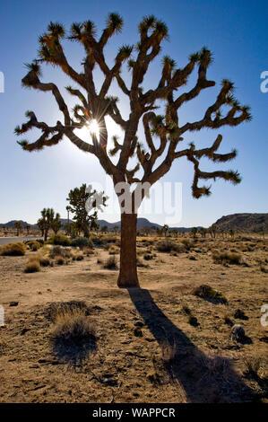 Il paesaggio del deserto a Joshua Tree National Monument in California, Stati Uniti d'America Foto Stock