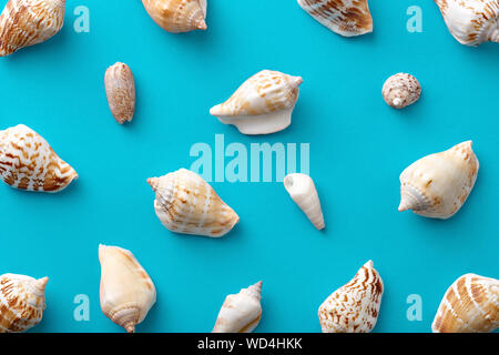 Full Frame Shot di conchiglie marine su sfondo blu Foto Stock