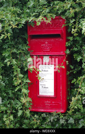 Red Royal Mail casella postale in una siepe a Coldingham Bay Foto Stock