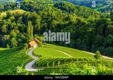 Spicnik, Maribor, Slovenia. Famoso a forma di cuore la strada del vino. Foto Stock